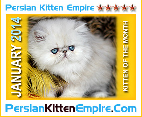 Persian Kitten Empire - GLOBAL Breeder Directory