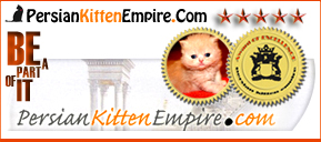 Persian kittens for sale in hudson valley ny
