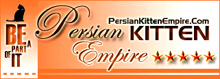 Persian Kitten Empire