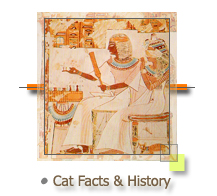 Cat Facts and History
