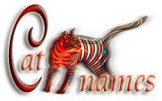 N Cat Names Cat Names